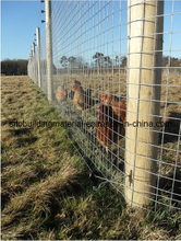 Wire Fence/Wire Mesh Fence /Grass Land Fence/Field Fence/Animal Fence